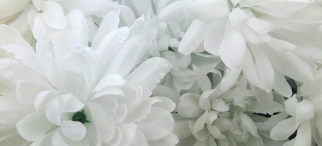 東京や千葉県、埼玉県で家族葬が増えている理由