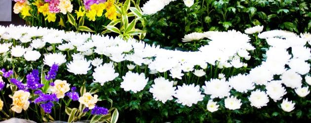 御花の分類や加工された生花の誕生に関する知識