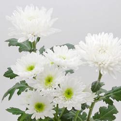 キリスト教式での献花