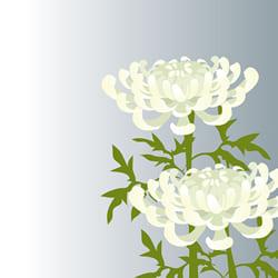 樒の次に選ばれるのは菊の花