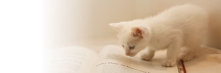 市川市の猫ちゃんのご葬儀