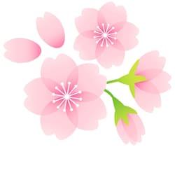 命日が桜の季節を重なった