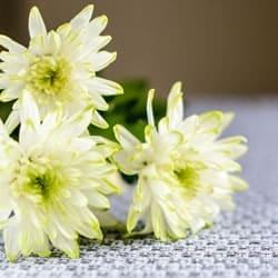 白い色の献花